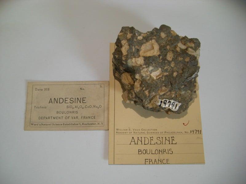 Andésine de Boulouris, Saint-Raphaël, Var, France.