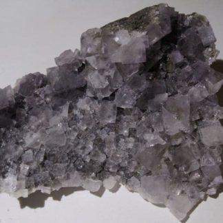 Fluorine violette de Durfort, Gard.