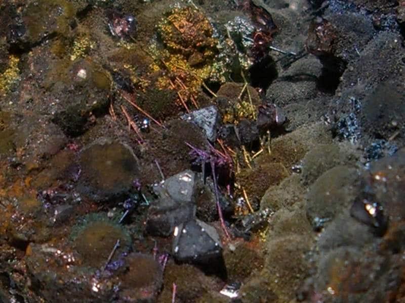 Cristaux de cuprite sur matrice de la mine du Moulinal (Tarn).
