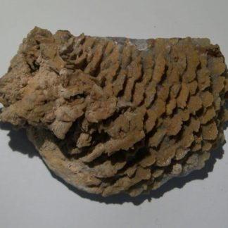 Fluorine micro-cristalline sur barytine, Les Porres, Les Arcs, Var.