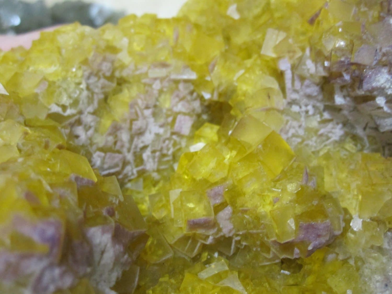 Fluorine jaune et violette, Le Bois Clair, Sologny, Saône-et-Loire.