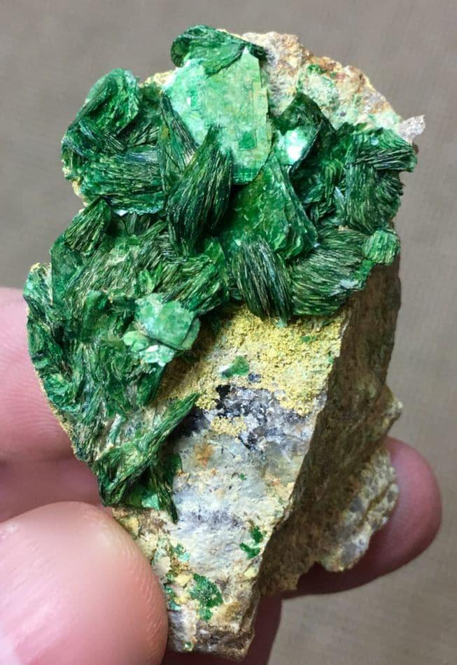 Torbernite sur dewindtite (parsonsite) de la mine de Rophin (Puy-de-Dôme).