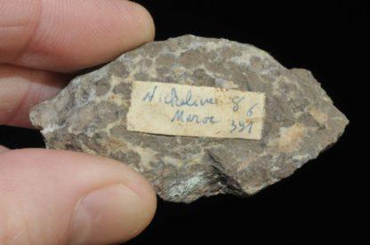 Nickelite du Maroc (ex Deyrolle).