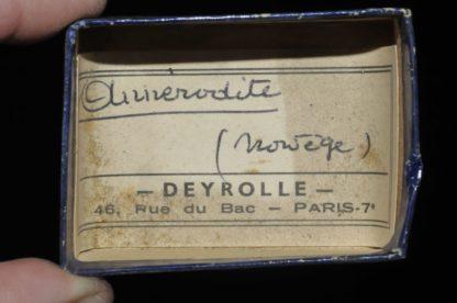 Annerodite de Norvège (ex Deyrolle).