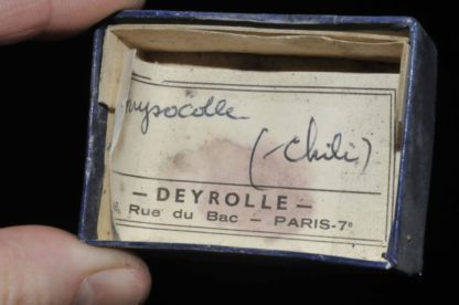 Chrysocolle du Chili (ex Deyrolle).