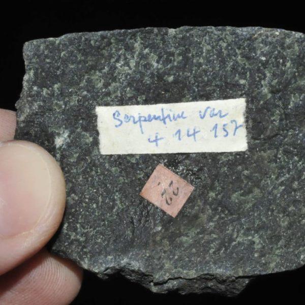 Serpentine du Var (ex Deyrolle).