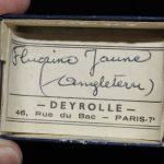 Fluorine jaune d'Angleterre (ex Deyrolle).
