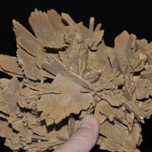 Rose des sables (gypse) d'Algérie