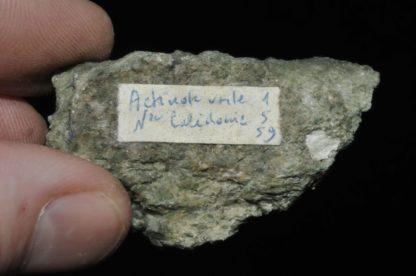 Actinote verte de Nouvelle Calédonie (ex Deyrolle).