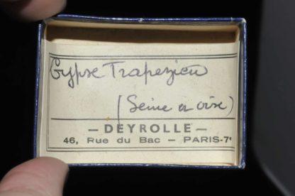 Gypse trapézien de Seine et Oise (ex Deyrolle).