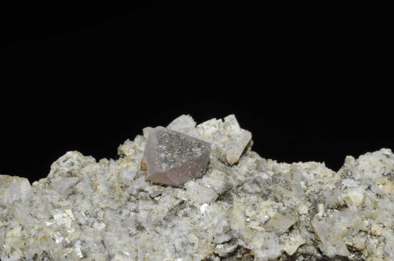 Fluorine rose de Chamonix (massif du Mont Blanc).