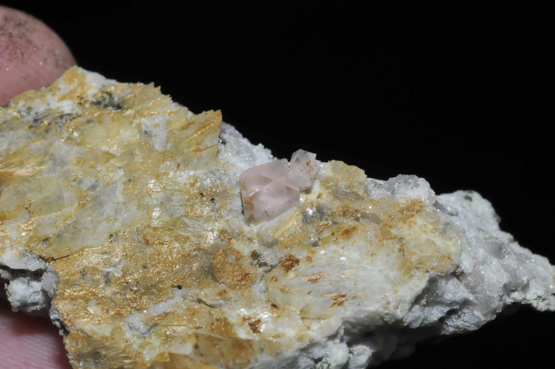 Fluorine rose du Mont-Blanc (Chamonix - Haute-Savoie).