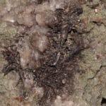 Superbe dravite sur plaque d'albite chloriteuse, Maurienne, Lauzière, Savoie