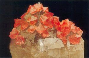 Cristaux de fluorine rose sur cristal de quartz fumé de Chamonix, massif du Mont-Blanc, Haute-Savoie, France.