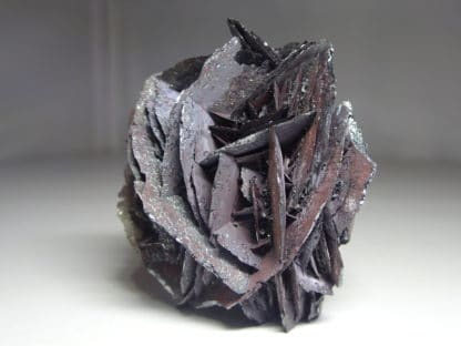 Rose de fer d'hématite en provenance du Saphoz, Haute-Saône, Vosges.