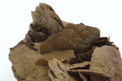 Sidérite en pétales, Mine de Pierre Rousse, Vizille, Isère.