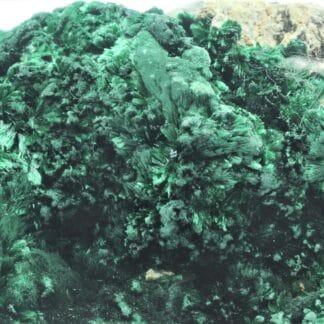 Malachite verte fibreuse, Katanga, Congo.