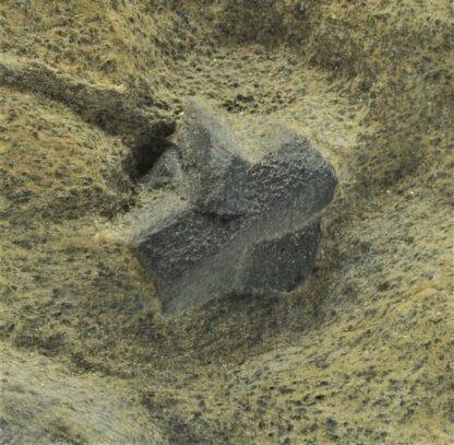 Staurotide (Staurolite), Coray – Scaër, Finistère, Bretagne.