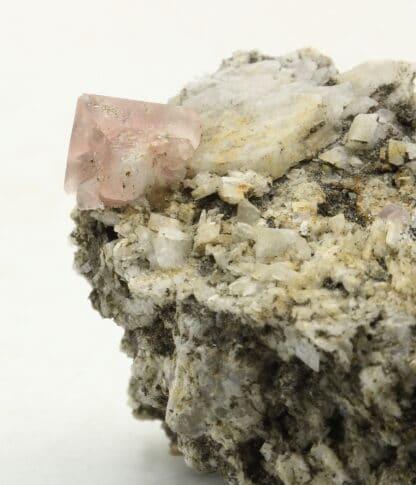 Fluorine rose du Mont-Blanc (Chamonix - Haute-Savoie)