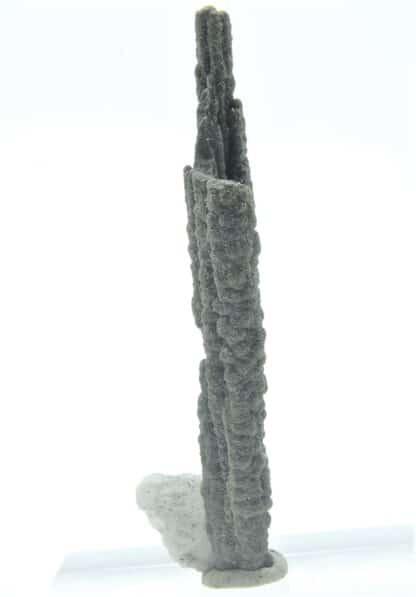 Stalactite de Pyrite et Baryte, Les Cèdres, Mine des Malines, Gard.
