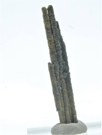 Stalactite de Pyrite, Les Cèdres, Mine des Malines, St-Laurent-le-Minier, Gard.