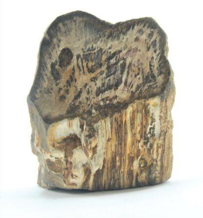 Tranche de bois fossilisé en agate poli, La Calamine, Belgique.