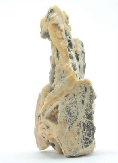Quartz fumé et Calcédoine dans du Bois Fossile, Meillers, Allier, Auvergne.