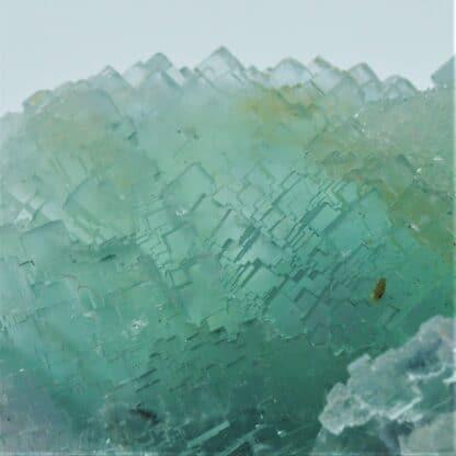 Fluorite (Fluorine) verte, Mine de La Barre, Saint-Jacques-d'Ambur, Puy-de-Dôme.