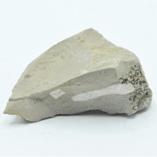 Fossile de Bioturbations dans un calcaire, Ex Collection du musée Bally.