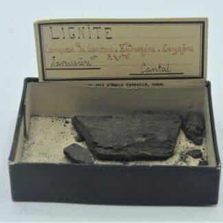 Lignite, Laveissière, Cantal, Ex Deyrolle.